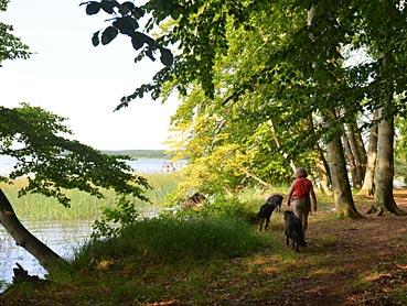teutoburger wald wandern mit hund